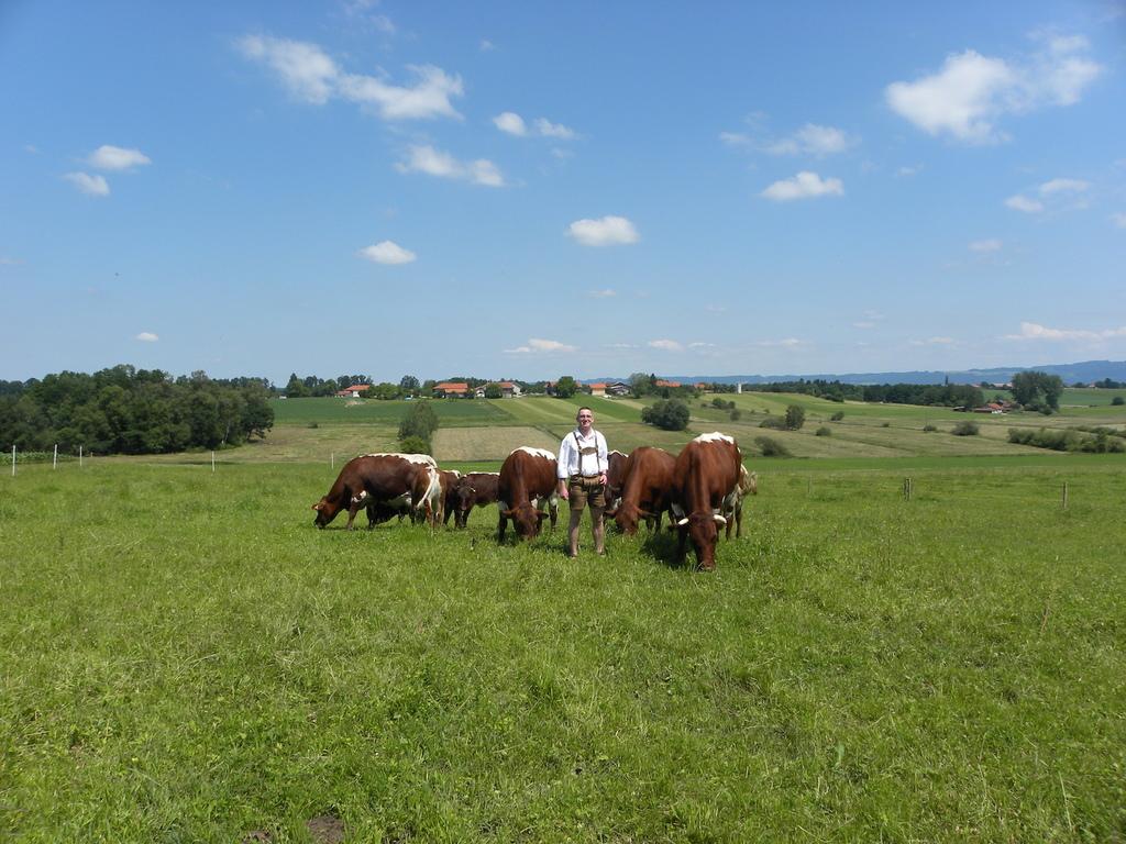 Heimaier mit Rinder
