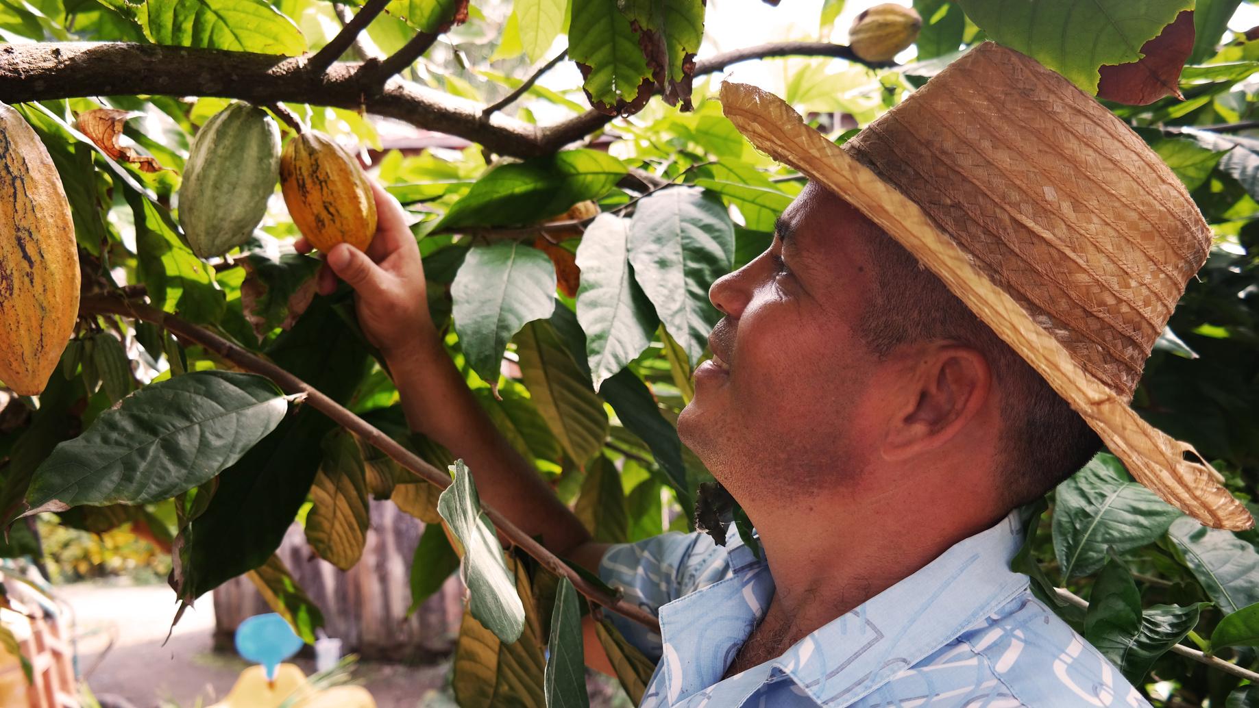 Kakao Farmer